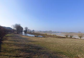 Trierveld Koeweide